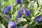 Open huis voor bijen & vlinders met Hebe Addenda®!