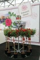 Corinne's Choice: een persoonlijke en unieke roos!