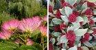 Van Vliet New Plants presenteert twee nieuwe soorten