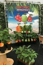 Green Fits All: zelf exotische vruchten kweken