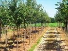 Green Fits All: Kweken met oog voor milieu