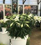 Nieuwe aanwinst Lily Looks op vakbeurs Plantarium!