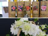 Plant'n'Relax Bio Tube en Clematis 'Maria Sklodowka Curie' PBR winnen Persprijs Plantarium 2014