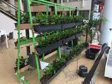 Amazingworld en Power Plant Beste Idee Plantarium 2016